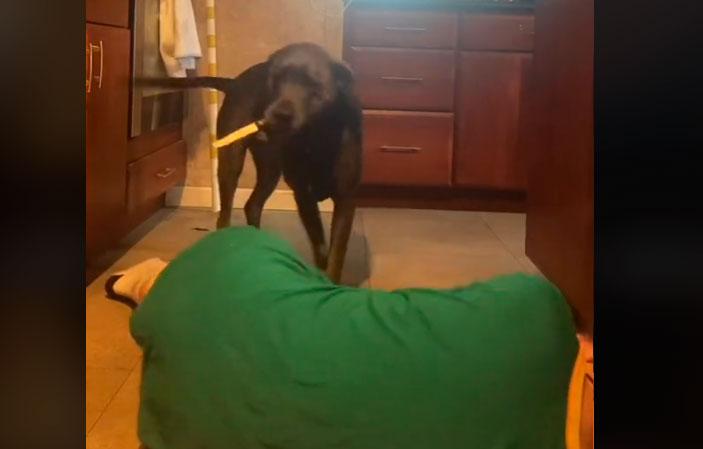 VIDEO  Perro se convierte en viral por su reacción al ver a su dueña fingir un desmayo