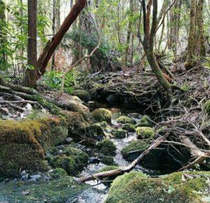 Comunidad de Los Laureles se organiza para salvar al último bosque nativo de Longaví