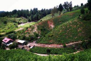 Viñedos chilenos buscan ser Patrimonio de la Humanidad en la UNESCO