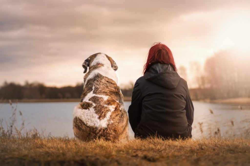 10 signos de que eres un fanático de las mascotas