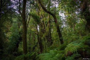 Agroecología en Chile: ¿puede una buena alimentación proteger la biodiversidad?
