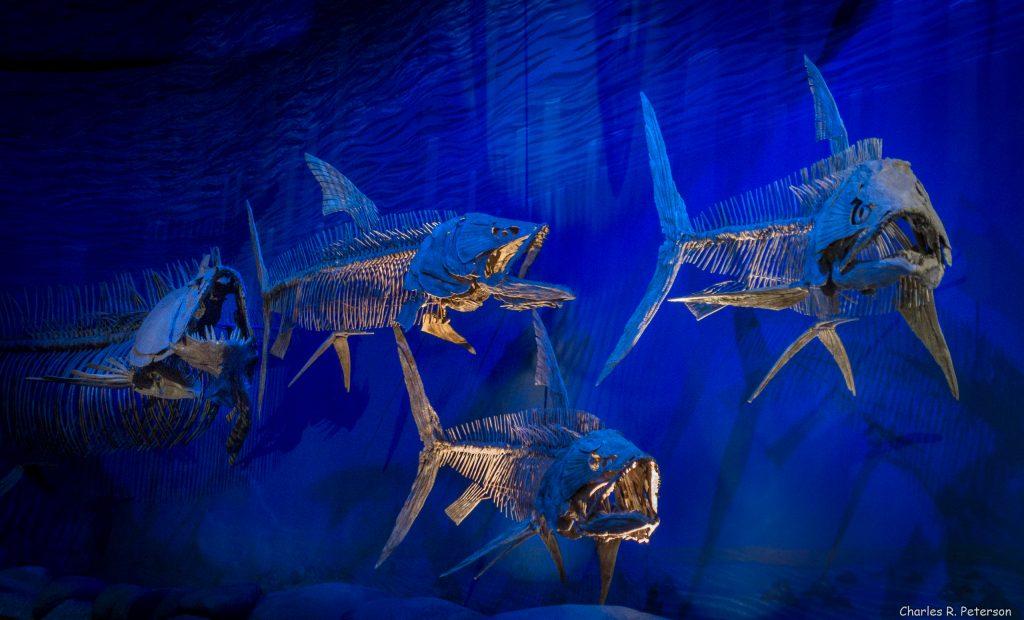 Paleontólogos U. de Chile hallan inéditos fósiles de peces de la época de los dinosaurios