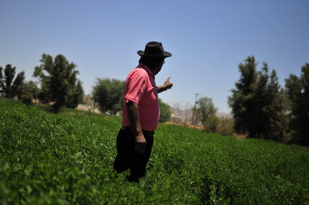 Piden fiscalizar empresa por uso de pesticidas que estarían afectando la salud
