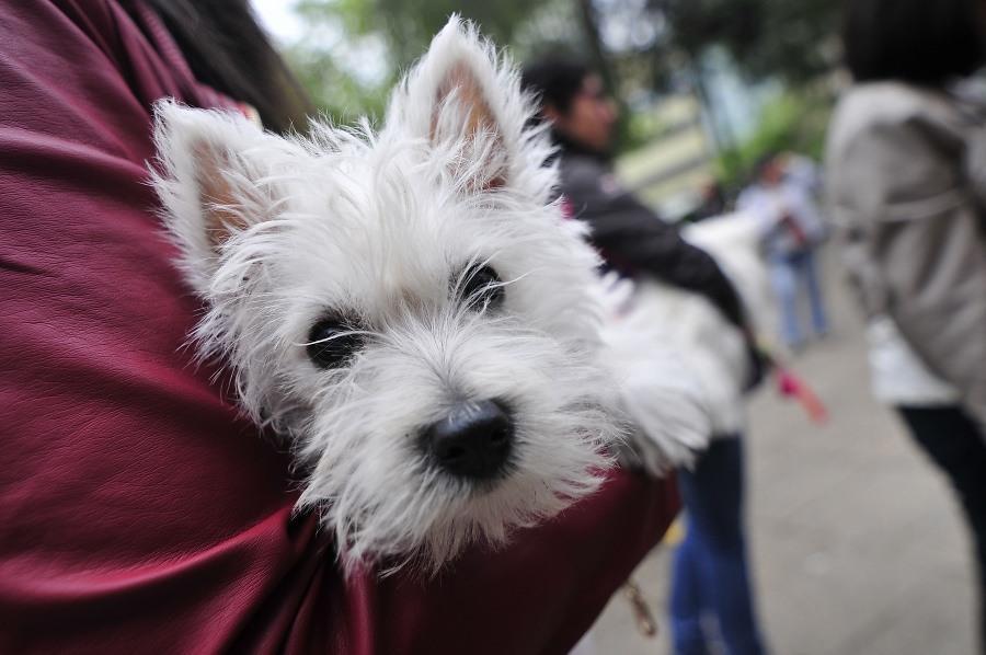 Proyecto de ley busca dar a trabajadores un día de licencia por fallecimiento de mascotas