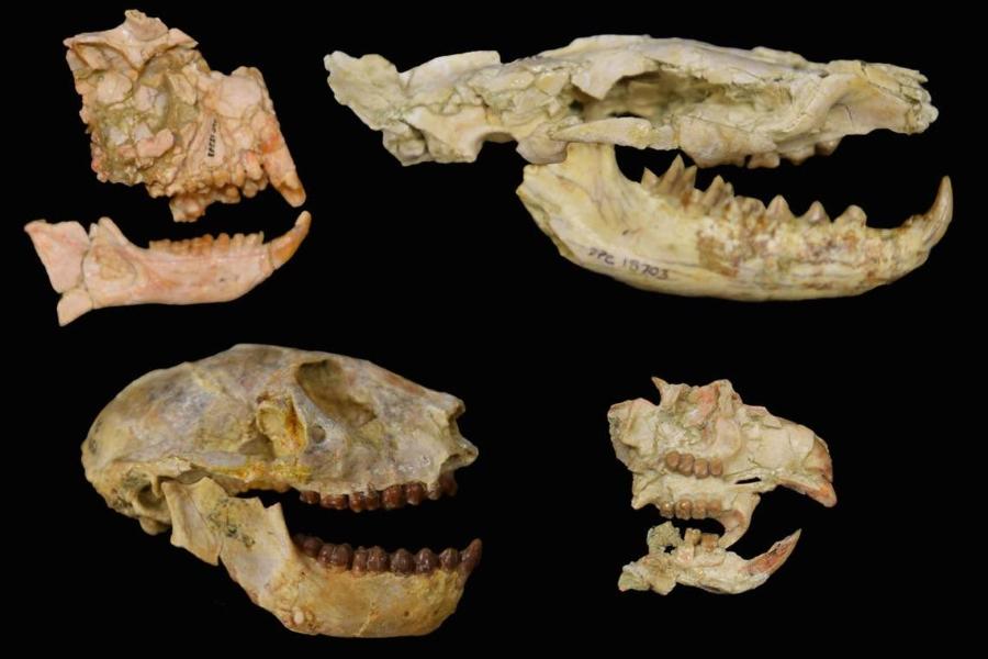 África sufrió una desconocida extinción masiva hace 30 millones de años