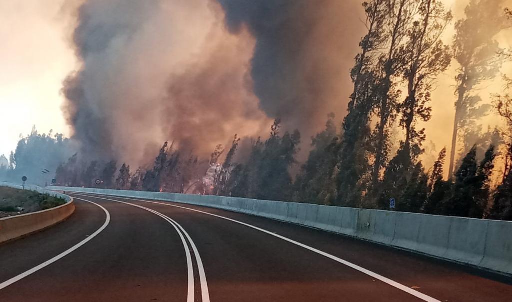 Los Andes: Incendio forestal consume cerca de 20 hectáreas en Panquehue