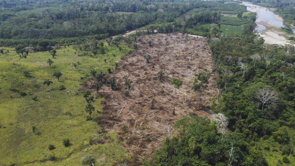 Perú alcanza cifra de deforestación más alta en los últimos 20 años