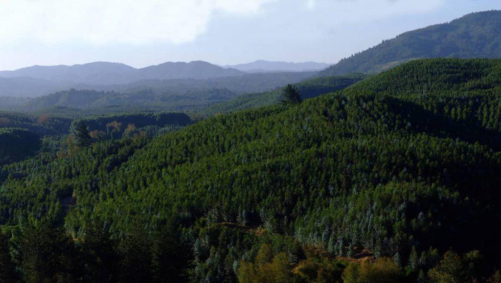 Científicos piden que la industria forestal pase por una evaluación de impacto ambiental